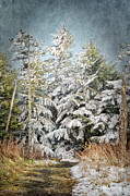 Snow Covered Trees Print by Cheryl Davis