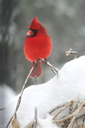 Diane Merkle - Snow Day