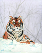The Tiger Paintings - Snow day by Laurie Bath