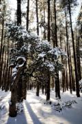 Saija  Lehtonen - Snow Day