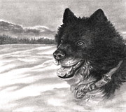 Grayscale Drawings - Snow Dog by Kathleen Kelly Thompson