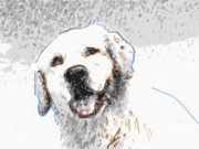 Dogs Digital Art Posters - Snow Dog Poster by Laura Brightwood