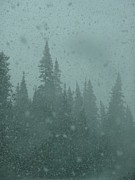 Outlook Photos - Snow Falling Among Evergreens by Angela Hansen