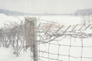 Snow Trees Posters - Snow fence Poster by Sandra Cunningham