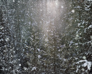 Winter Photos Posters - Snow Flakes Poster by Leland Howard