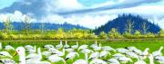 Washington State Skagit County Paintings - Snow Geese Dodge Valley by Bob Patterson