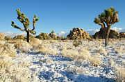 Pretty Clouds Prints - Snow In Joshua Tree National Park Print by Connie Cooper-Edwards