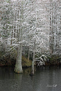 Lowcountry Prints - Snow in the Lowcountry Print by Suzanne Gaff