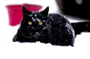 Winter Scenes Photos - Snow Kitty by Emily Stauring