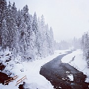 Trees Art - Snow Landscape - Trees and river by Matthias Hauser