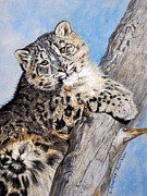 Nature Study Painting Framed Prints - Snow Leopard Cub Framed Print by Louise Charles-Saarikoski