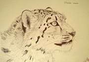 Fangs Drawings Posters - Snow Leopard in Pen Poster by Steven Frost