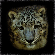 Leopards Digital Art Acrylic Prints - Snow Leopard Painterly 1 Acrylic Print by Ernie Echols