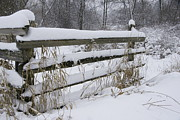 Split Rail Fence Prints - Snow on the Fence Print by Gordon Brown