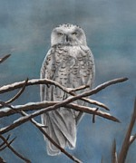 Owl Pastels - Snow Owl by Christian Conner