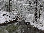 Winter Trees Photo Originals - Snow Pond by Kathy Bucari