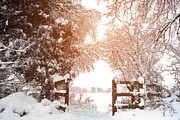 Wintry Digital Art Prints - Snow Ruff Wood Ormskirk Print by Liam Liberty