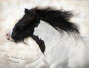 Gypsy Posters - Snow Stallion Poster by Terry Kirkland Cook