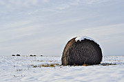 Snow On Field Posters - Snow Topped Bale Poster by Mary Frances