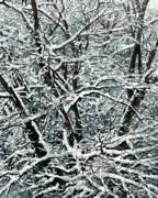 Snow Tree Print by Nadi Spencer