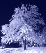 Cold Night Posters - Snow Tree Poster by Oriyan Phipps