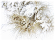 Holiday Season Prints - Snow Whiskers Print by Julie Palencia