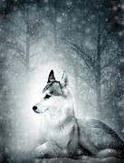 Winter Trees Mixed Media Posters - Snow Wolf Poster by Svetlana Sewell