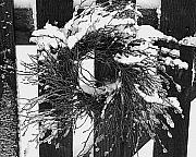 Snow Wreath Print by Diane E Berry
