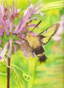 Moth Drawings - Snowberry Clearwing Moth by Courtney Trimble