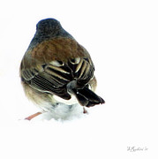 Snowstorm Prints Posters - Snowbird Poster by Sandy Rubini
