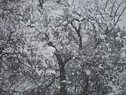 Snowblind Print by Shawn Hughes