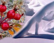 Contemporary Art Print Photos - Snowdrifts And Roses by Terril Heilman