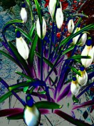 Digitally Altered Prints - Snowdrops in Abstract  Print by Beth Akerman