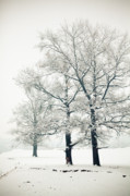 Wintry Photo Posters - Snowed Poster by Gabriela Insuratelu