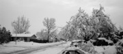 Snowed Trees Photos - Snowed In by Jera Sky