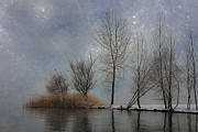 Winter Trees Art - Snowfall by Joana Kruse