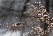 Linda Knorr Shafer - Snowfall