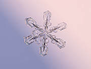 Tom Biegalski Metal Prints - Snowflake 1 Metal Print by Tom Biegalski