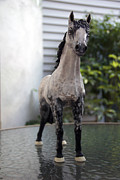 Equine Sculpture Sculptures - Snowflake 2 by Yelena Rubin