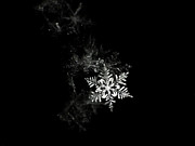 Black And White Photography Metal Prints - Snowflake Metal Print by Mark Watson (kalimistuk)