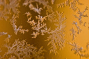 Winter Storm Photos - Snowflakes by Susan Yates
