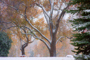 Red Posters - Snowy Autumn Landscape Poster by James Bo Insogna