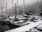 Hornby Island Photos - Snowy Boats by Derek Holzapfel