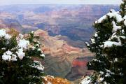 Lhr Images Framed Prints - Snowy Dropoff - Grand Canyon Framed Print by Larry Ricker