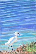 Gulf Pastels Framed Prints - Snowy Egret at Sanibel Island Framed Print by Dana Schmidt