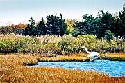 Snowy Digital Art Originals - Snowy Egret-Island Beach State Park N.J. by Steve Karol