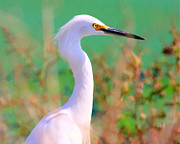 Great White Egrets Framed Prints - Snowy Egret . Painterly Framed Print by Wingsdomain Art and Photography