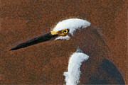 Snowy Digital Art - Snowy Egret Profile Painterly by Ernie Echols
