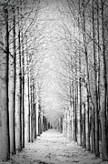 Vanishing Framed Prints - Snowy Forest Framed Print by by Rafael Zwiegincew