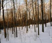 Winter Scenes Photos - Snowy Forest by David Chapman